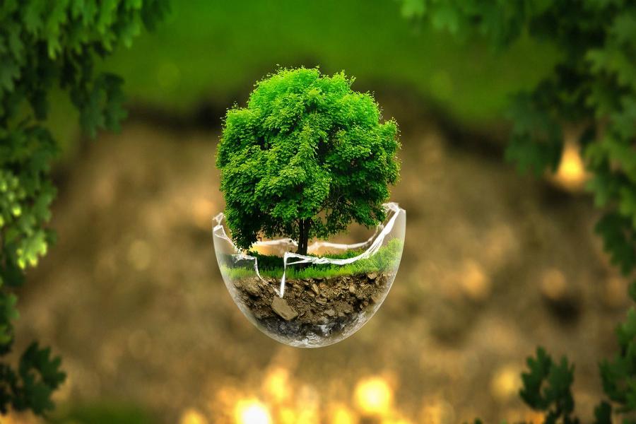 Ecologia na consagração