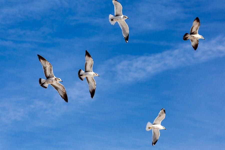 Livres como os pássaros…